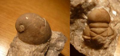 Paleontologická vycházka do okolí Koněprus 12. 5. 2019